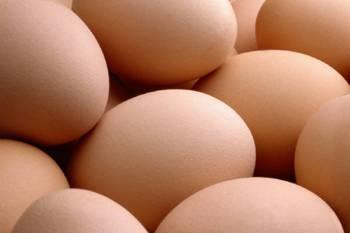 L'œuf : compagnon de la croissance de l'enfant
