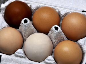 Lequel de la poule ou de l'œuf ?