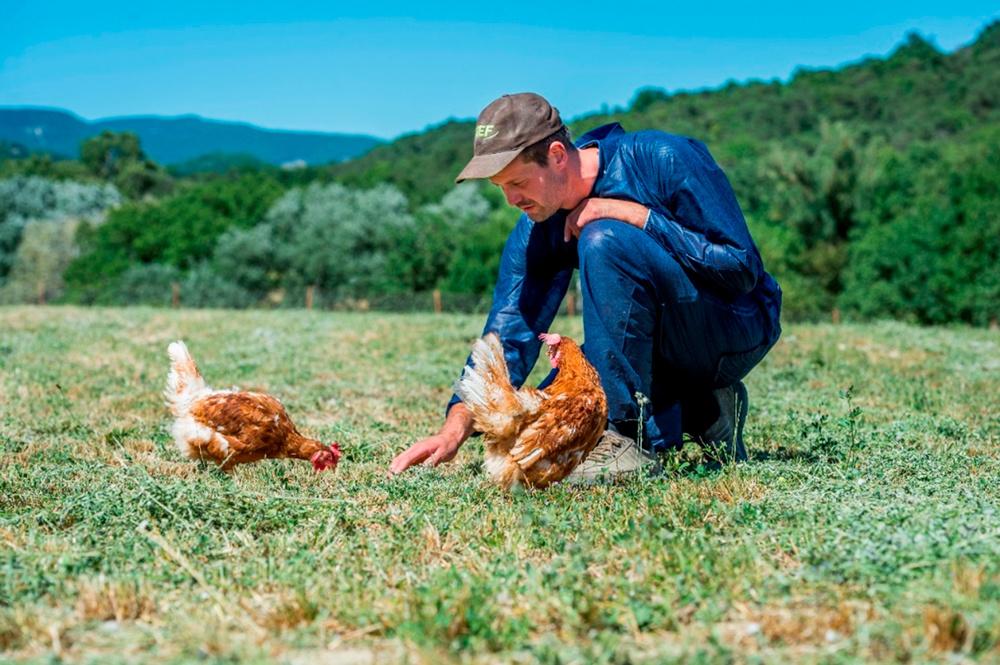 Eleveur de poules