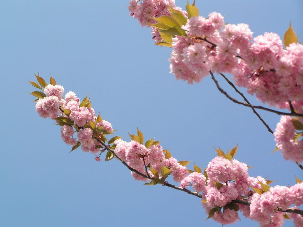 Fleurs - SoToven